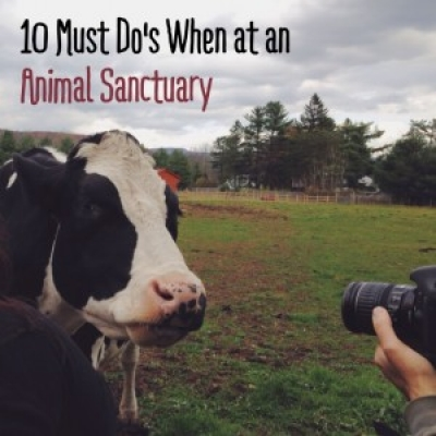 10 Must Do's When Attending an Animal Sanctuary